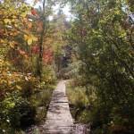 Path at Bear Brook