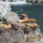 Snoozing seals